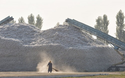 The Situation with Uzbek Cotton: Why the Pledge Remains in Place and a Path Forward